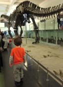 Leosarus rex.