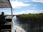 boating through Preak Toal bird sanctuary