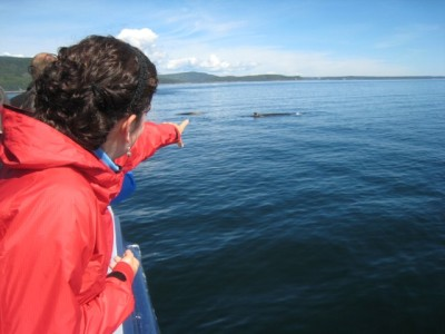 Whale watching (asea)
