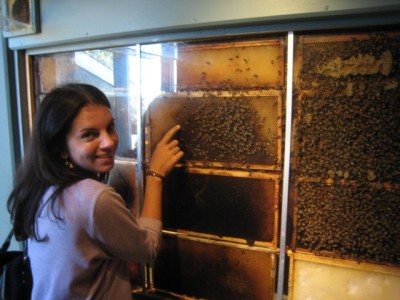My honeybee