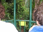heading out for our Rainforest Aerial Tram ride