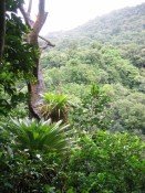 some large epiphytes