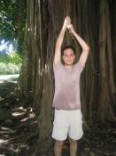 huge ficus (Banyan) tree at Dominica's Botanical Garden