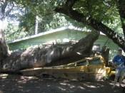 school bus victim of hurricane david
