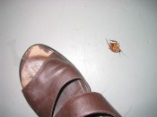 an unwelcome guest in our room - it seemed much bigger at the time