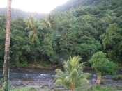 the view from our balcony at the Layou River Hotel
