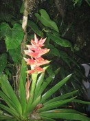 yet another gorgeous bromeliad