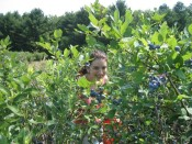 stalked in the blueberry patch