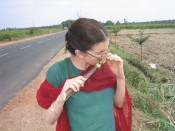 fresh-cut sugar cane