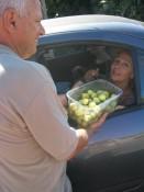 freshly picked figs (or is it preshly ficked pigs?)