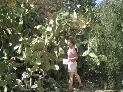 picking sabra fruit