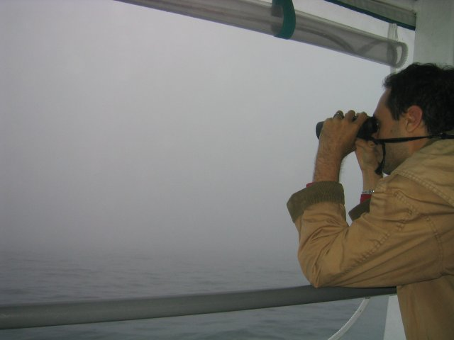 it takes an EXPERT birder to find puffins in zero-visibility fog (but we found them anyway)