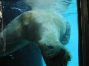 polar bear rump